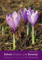 �afrani (Crocus)