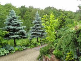 vrt Nade Pintari?